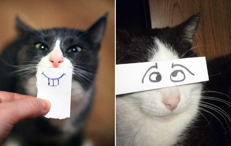 Пятничный котик