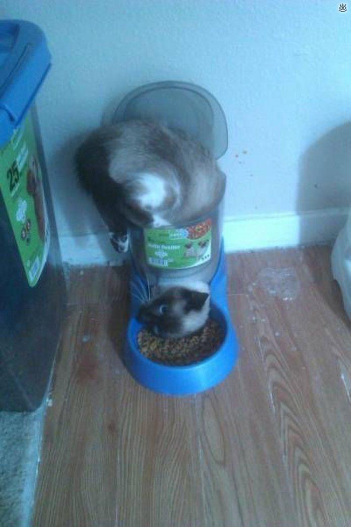 Снова кот, сломавший систему